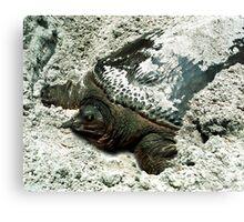 Nesting Softshell Turtle #1. Canvas Print