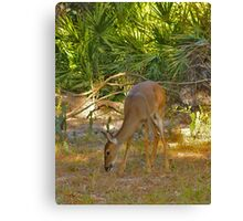 White-Tailed Deer Portrait #1. Lake Kissimmee S.P. Canvas Print