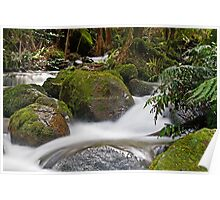 Rainforest gallery Warburton Poster