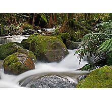 Rainforest gallery Warburton Photographic Print