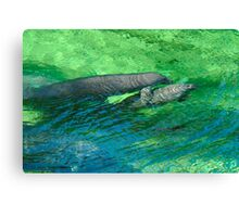 Manatee Family. Blue Spring S.P. Canvas Print