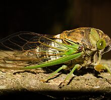 Green FLY by vasu