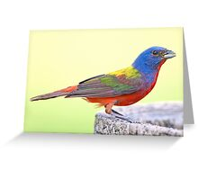 Painted Bunting in my Back Yard Greeting Card