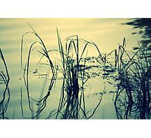 Reeds and Reflections in the Rainbow River Photographic Print