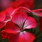 Happy Bright Geranium by Joy Watson