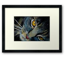The Cat in Coloured Pencil Framed Print
