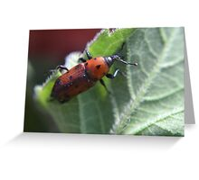 Weevil with a heart Greeting Card