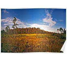 Cypress Dome & Black-Eyed Susans. Three Lakes W.M.A. Poster