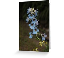 Blue Delphinium Greeting Card