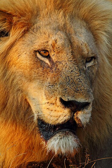 Most wanted! by Explorations Africa Dan MacKenzie
