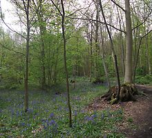 Holly Hill Woods by groovygreen