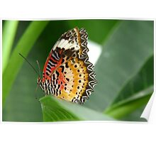 Red Lacewing Poster