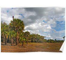 Palm Hammock. Econlockhatchee River S.F. Poster