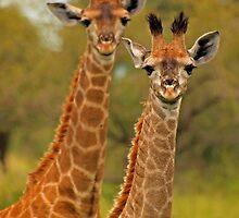 Too cute by Explorations Africa Dan MacKenzie