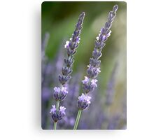provence couple Canvas Print
