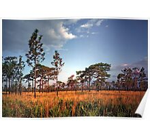 Sand Pine & Palmetto. Three Lakes W.M.A. Poster