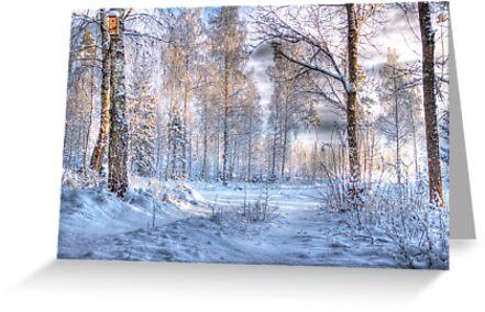 Winter in Forsheda's track I by João Figueiredo