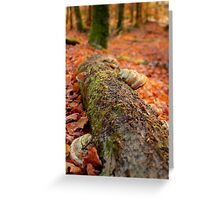 Details of an enchated forest I Greeting Card