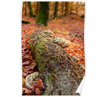 Details of an enchated forest I Poster