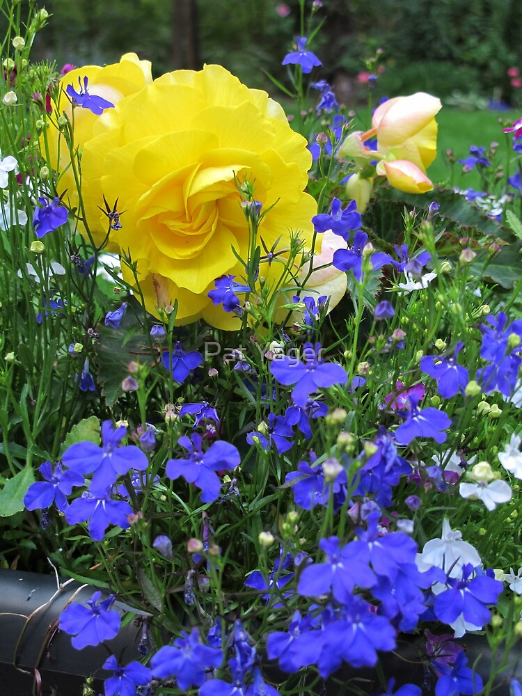 Blue and Gold by Pat Yager