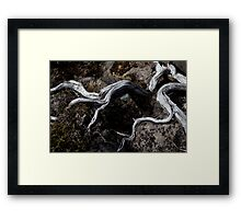 Exposed limbs Framed Print