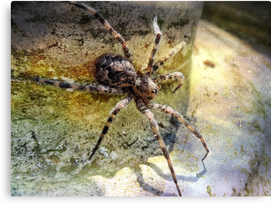 Spider Man by vigor