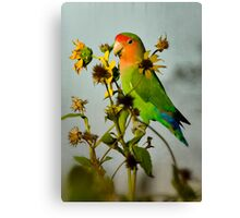 Can You Say Pretty Bird?  Canvas Print