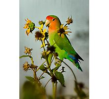 Can You Say Pretty Bird?  Photographic Print