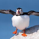 Puffin Dance by naturalnomad