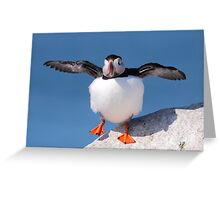 Puffin Dance Greeting Card