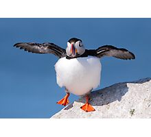 Puffin Dance Photographic Print