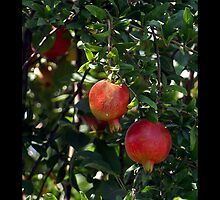 Pomegranates - - Posters & More by Maria A. Barnowl