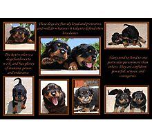 Rottweiler Memories Photographic Print