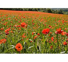 Poppies Chiltern Hills Photographic Print