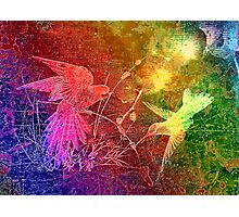 Birds. Photographic Print