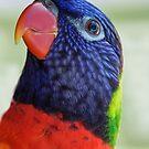 Rainbow Lorikeet by Heather Friedman