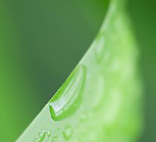 Green leaf on nature by seeker19
