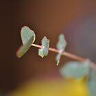 gum leafs by Rachael Donegan