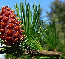 new pinecones by Shannon  Torrey