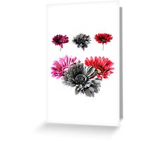 Gerbera Daisies Collage Greeting Card