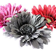 Purple, Black and Red Gerbera Daisies by MichelleKeohane