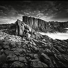 Boneyard Bold by Peter Hill