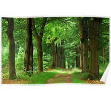 Walking under old beech-trees in summer Poster