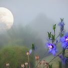 Moonlit in early summer by missmoneypenny