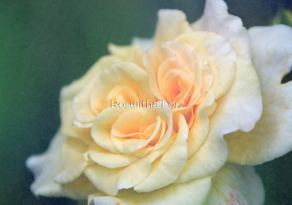 softly Rose by RosiLorz