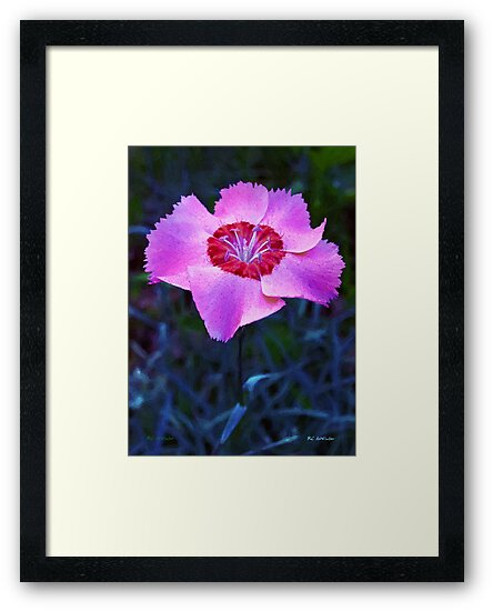 Pink Out Loud by RC deWinter