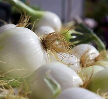 onions by thvisions