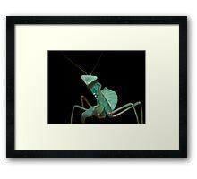 Giant African Praying Mantis Framed Print