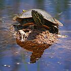 Sitting There Like A Bump On A Log by Vickie Emms