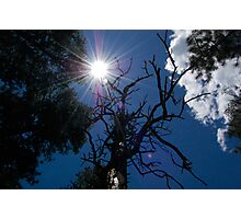 sun and tree Photographic Print